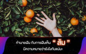 """ทำนายฝัน กับการฝันเห็น """"ส้ม"""" มีความหมายว่ายังไงกันแน่นะ"""