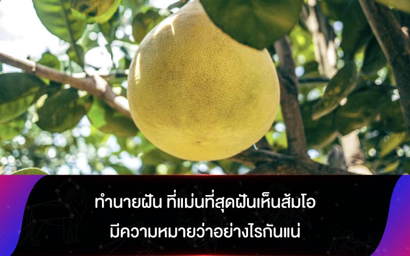 ทำนายฝัน ที่แม่นที่สุดฝันเห็นส้มโอ มีความหมายว่าอย่างไรกันแน่