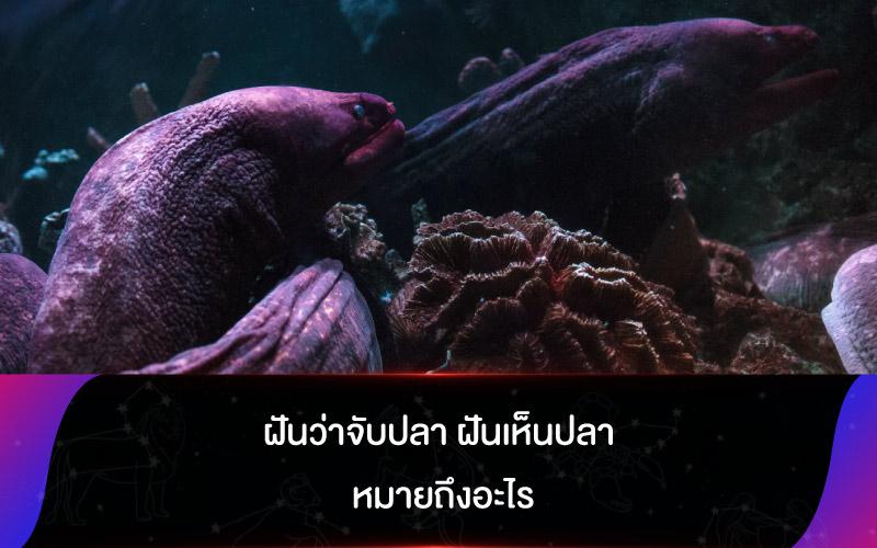 ทำนายฝัน ฝันว่าจับปลา ฝันเห็นปลา หมายถึงอะไร