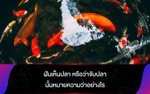 ทำนายฝัน ฝันเห็นปลา หรือว่าจับปลานั้นหมายความว่าอย่างไร