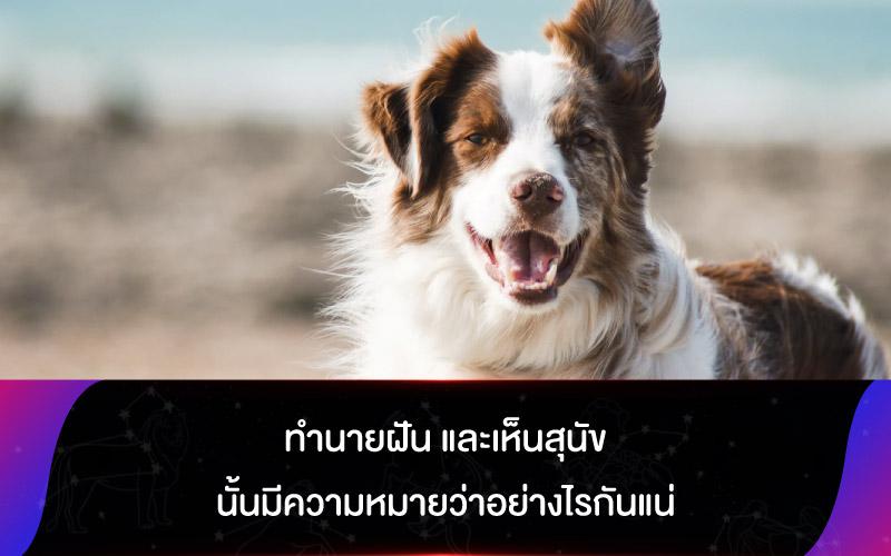 ทำนายฝัน และเห็นสุนัขนั้นมีความหมายว่าอย่างไรกันแน่