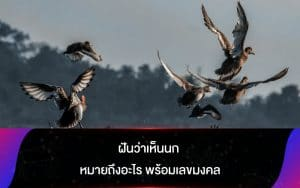 ฝันว่าเห็นนก หมายถึงอะไร พร้อมเลขมงคล