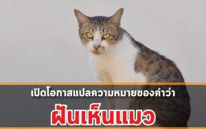 เปิดโอกาสแปลความหมายของคำว่าฝันเห็นแมว