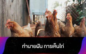 ทำนายฝัน การเห็นไก่ และความหมาย ที่แท้จริง ที่คุณควรรู้