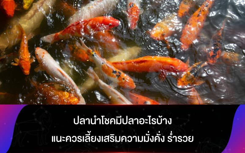 ปลานำโชคมีปลาอะไรบ้าง แนะควรเลี้ยงเสริมความมั่งคั่ง ร่ำรวย