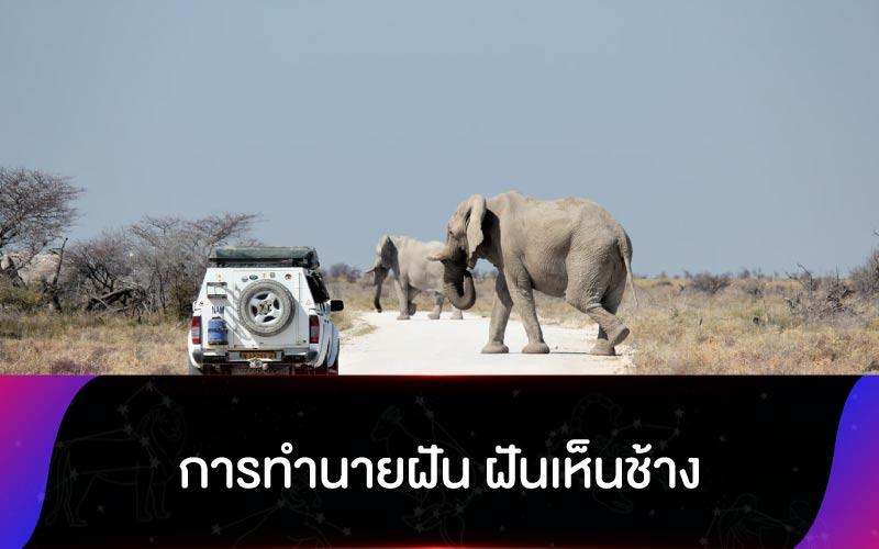การทำนายฝัน ฝันเห็นช้าง