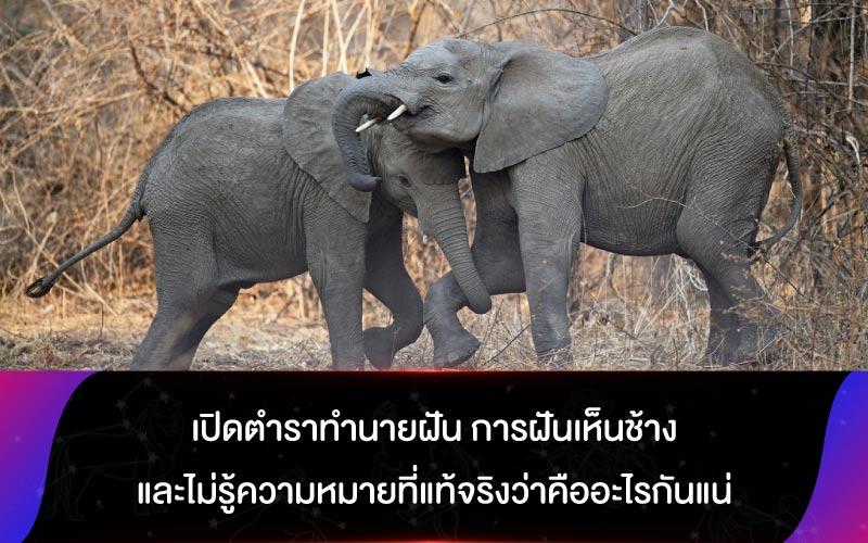 เปิดตำราทำนายฝัน การฝันเห็นช้าง และไม่รู้ความหมายที่แท้จริงว่าคืออะไรกันแน่