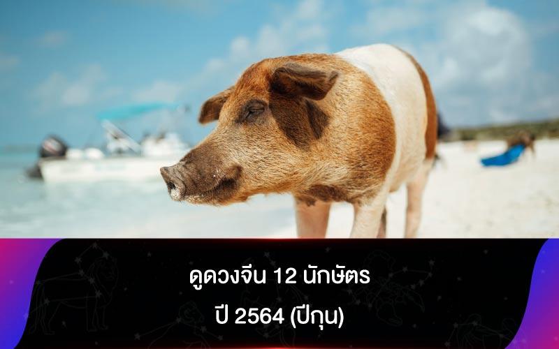ดูดวงจีน 12 นักษัตร ปี 2564 (ปีกุน)