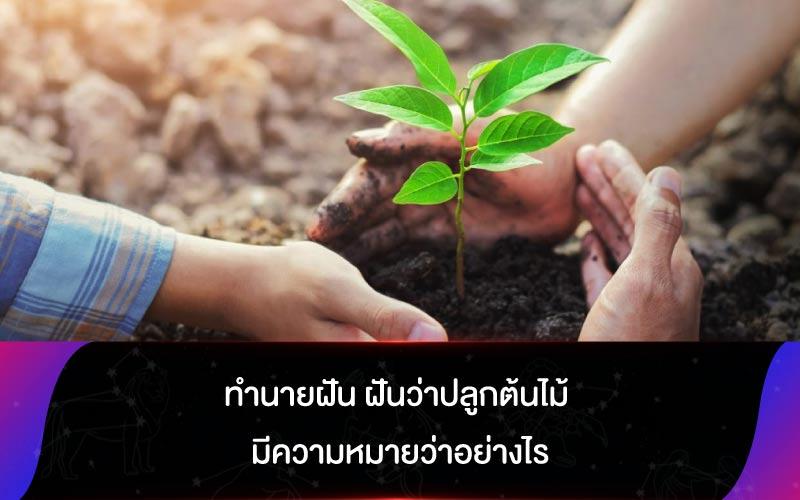 ทำนายฝัน ฝันว่าปลูกต้นไม้ มีความหมายว่าอย่างไร