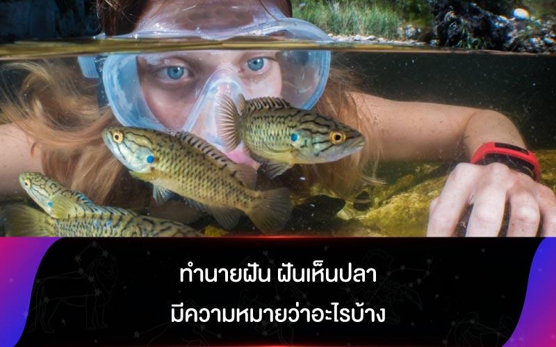 ทำนายฝัน ฝันเห็นปลา มีความหมายว่าอะไรบ้าง