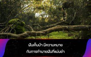 ฝันเห็นป่า มีความหมายกับการทำนายฝันที่แม่นยำ