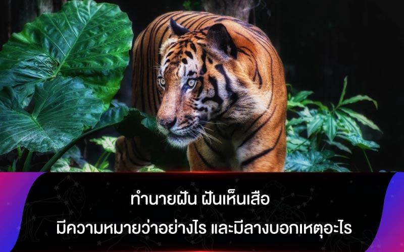 ทํานายฝัน ฝันเห็นเสือ มีความหมายว่าอย่างไร และมีลางบอกเหตุอะไร