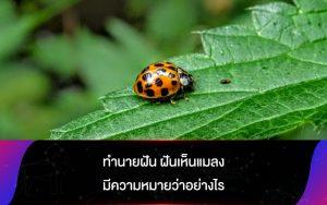 ทํานายฝัน ฝันเห็นแมลง มีความหมายว่าอย่างไร