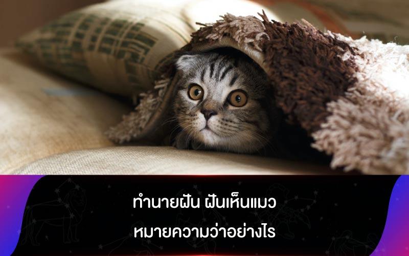 ทำนายฝัน ฝันเห็นแมว หมายความว่าอย่างไร