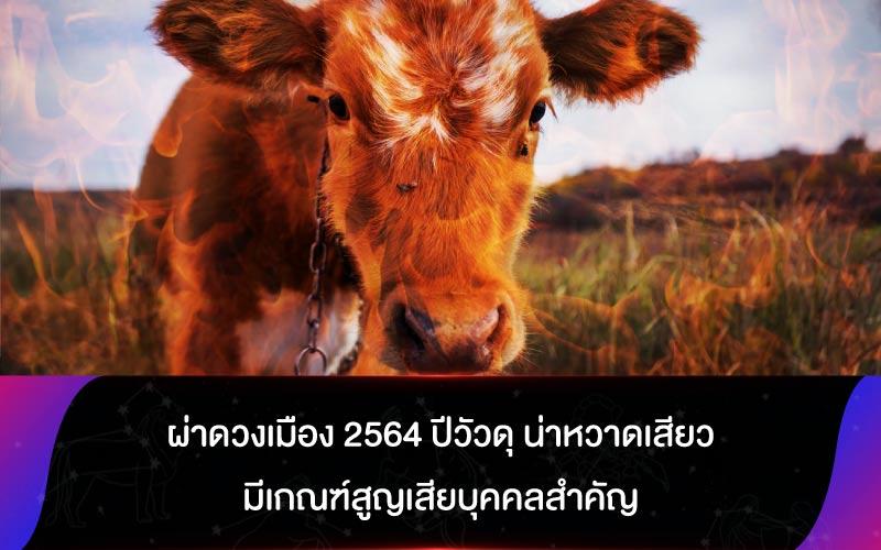 ผ่าดวงเมือง 2564 ปีวัวดุ น่าหวาดเสียว มีเกณฑ์สูญเสียบุคคลสำคัญ