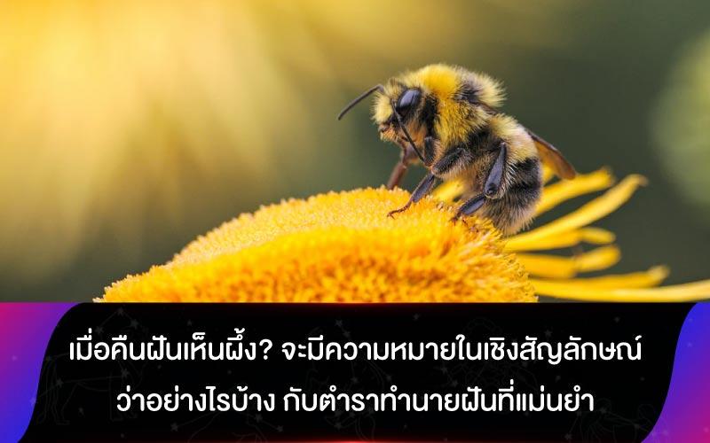 เมื่อคืนฝันเห็นผึ้ง? จะมีความหมายในเชิงสัญลักษณ์ว่าอย่างไรบ้าง กับตำราทำนายฝันที่แม่นยำ