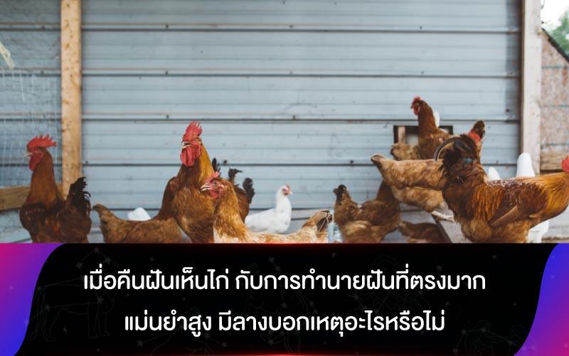 เมื่อคืนฝันเห็นไก่ กับการทำนายฝันที่ตรงมาก แม่นยำสูง มีลางบอกเหตุอะไรหรือไม่